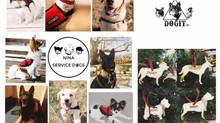 Το στολίδι της  Dogit...για τους σκύλους βοηθούς παιδιών με αναπηρία