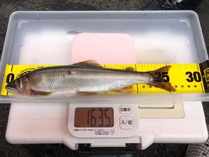 釣果報告…今シーズン最大👍
