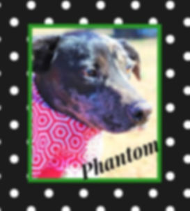 HSIC Phantom 2.jpg