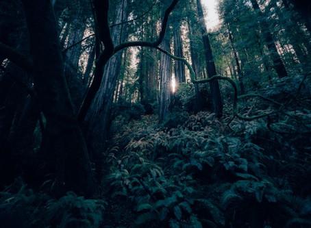 Horror na Amazônia (parte 1) - a criatura que há séculos assombra a maior floresta do mundo.