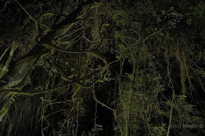 floresta sinistra2.jpg
