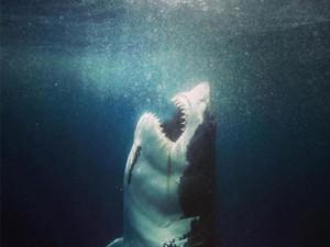 Tubarões e o Verão em que Tentei Surfar