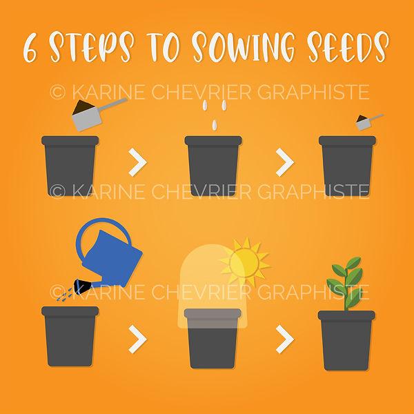 how to sowing seeds garden vegetables home karine chevrier graphiste étapges pour semer des graines potager à la maison