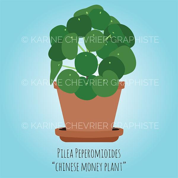 pilea peperomioides chinese money plant monnaie chinoise illustration vector vectorielle plante d'intérieur Karine Chevrie Graphiste