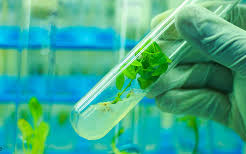 The difference between pharmaceutical and biotechnology
