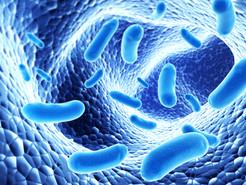 Probiotics in Favor of Life