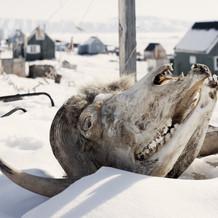 格 陵 兰 岛 荒 野 的 愤 怒 幽 灵