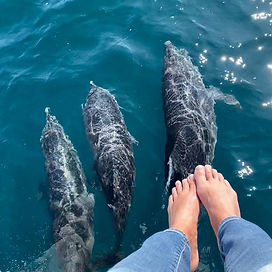 Dolphins from the deck with Bimini Saili