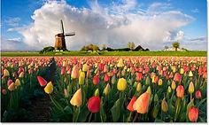 голландия.jpg