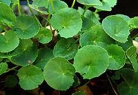 herb-4033469_1920.jpg