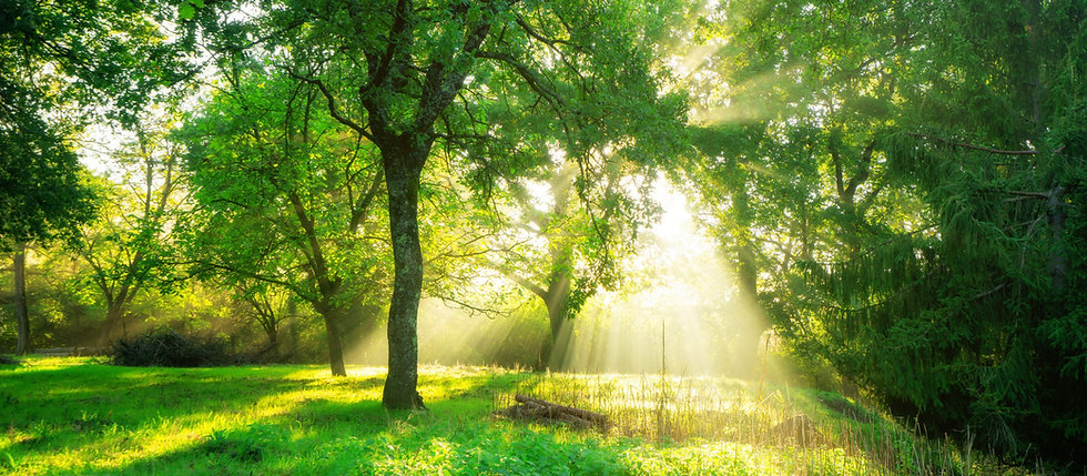 green-forest-landscape-sunrise.jpg