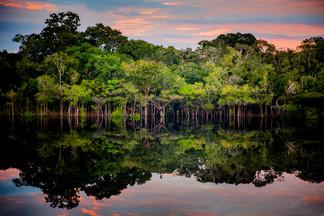 Amazon (Brazil)
