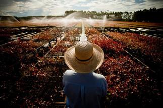 Mato Grosso do Sul (Brazil)