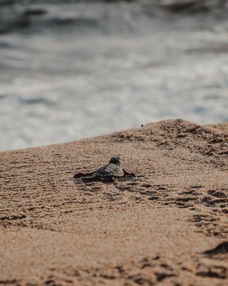 2020 Puerto Escondido Turtles 8.jpg