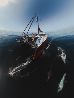Dolphins-34.jpg