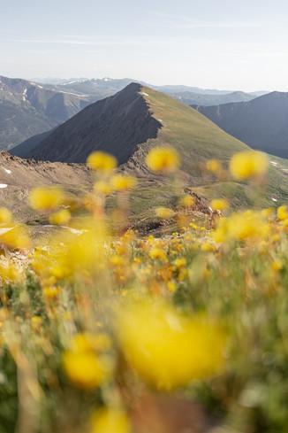 Torrey Peak 14er 25.jpg