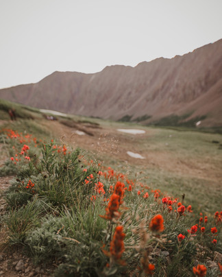 Torrey Peak 14er 8.jpg