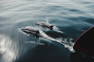 Dolphins-1.jpg