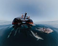 Dolphins-40.jpg