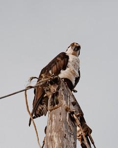Eagle-1.jpg