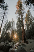 Sequoia National Park 2.jpg