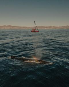 Whales-3.jpg