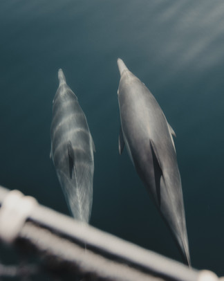 Dolphins-6.jpg
