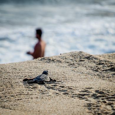 2020 Puerto Escondido Turtles 9.jpg