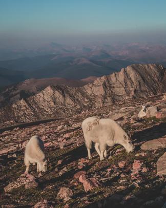Mt Evans 14 NOCR.jpg