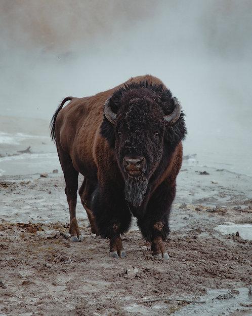 """""""Buffalo Hot Spring"""""""