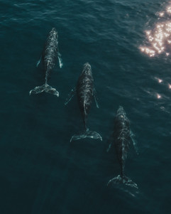 Whales-14.jpg