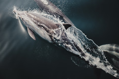 Dolphins-19.jpg