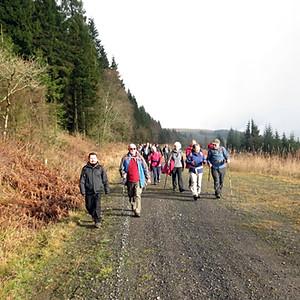 Coed Rheola Forest - Pentreclwydau