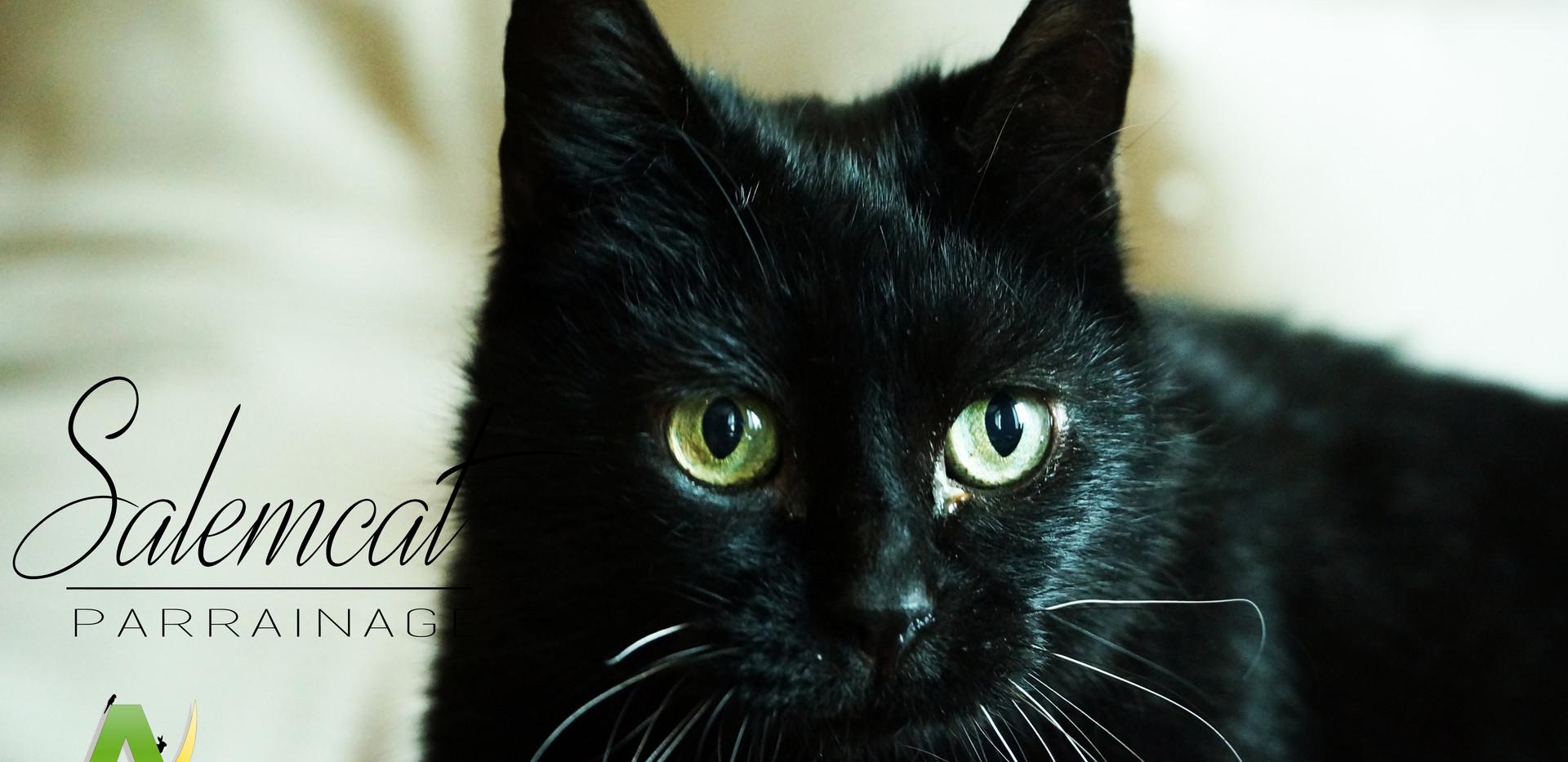 Salemcat