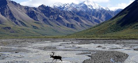 arctic national wildlife refuge.png