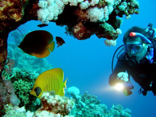 Scuba Diving in Huatulco, Oaxaca