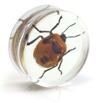 1x Red Beetle Resin Plug