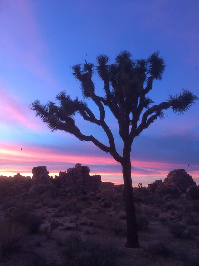 DLD Sunset 2