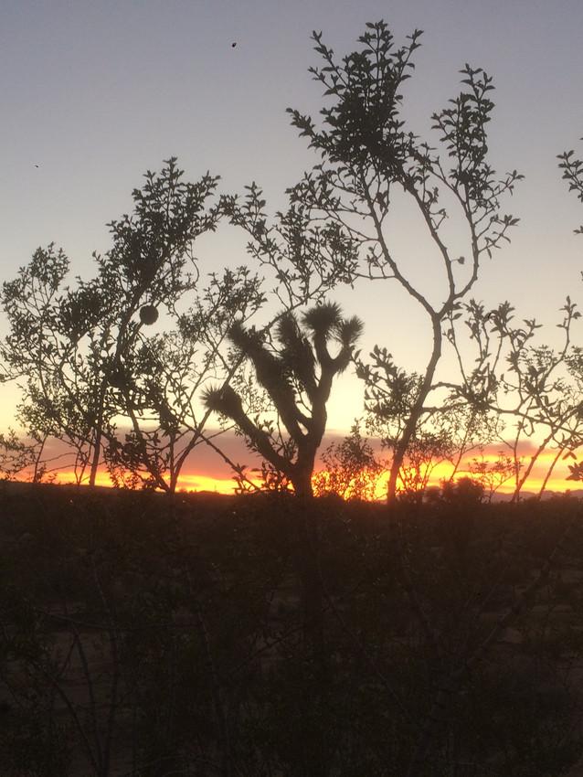 DLD Sunset