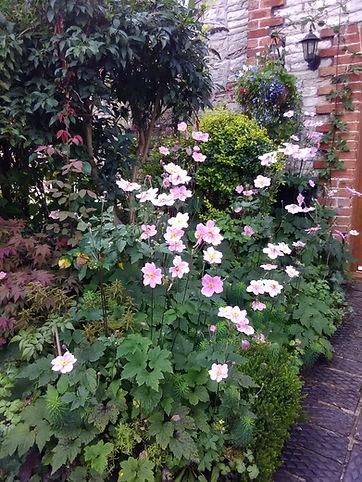 C-best-front-garden.jpg