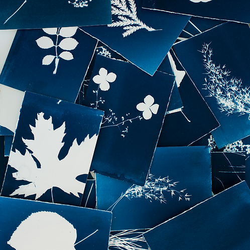 DIY Cyanotype Greetings Card Printing Kit