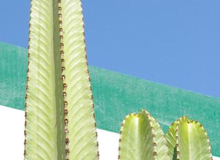 12/05 - 13/05 2010 Plastic Peru