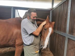 Horse-Pro-Tech à Equi-Complet