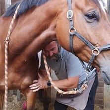 Pourquoi les massages des chevaux sont importants