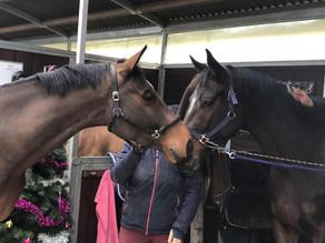 Le nouveau cheval de Ride and Go rejoint Equi-Complet