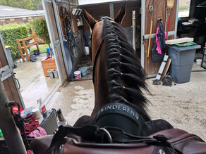 Winderen - Innovative Equestrian Solution