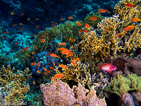 Colorful fish colony and fire corals