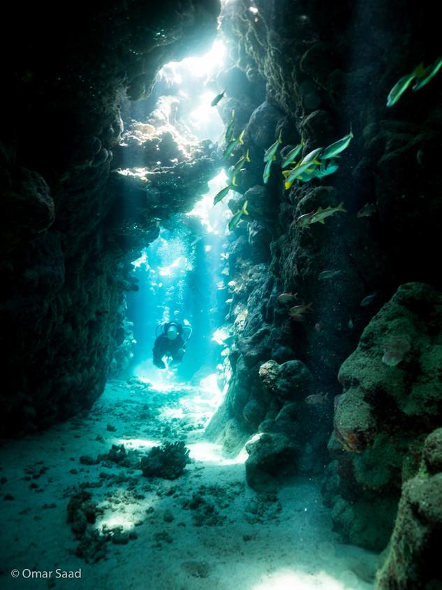 The dolphin house cavern