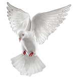 dove-clipart-87145.png