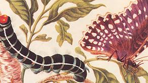 Referentes: A muller que debuxaba insectos / La mujer que dibujaba insectos